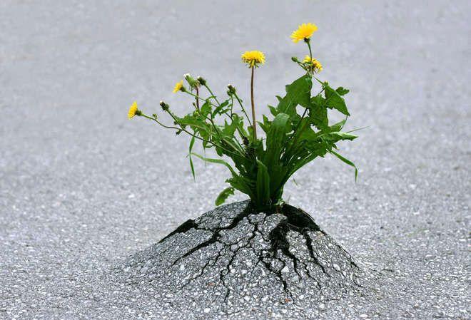 et à la fin c'est toujours la vie qui triomphe...