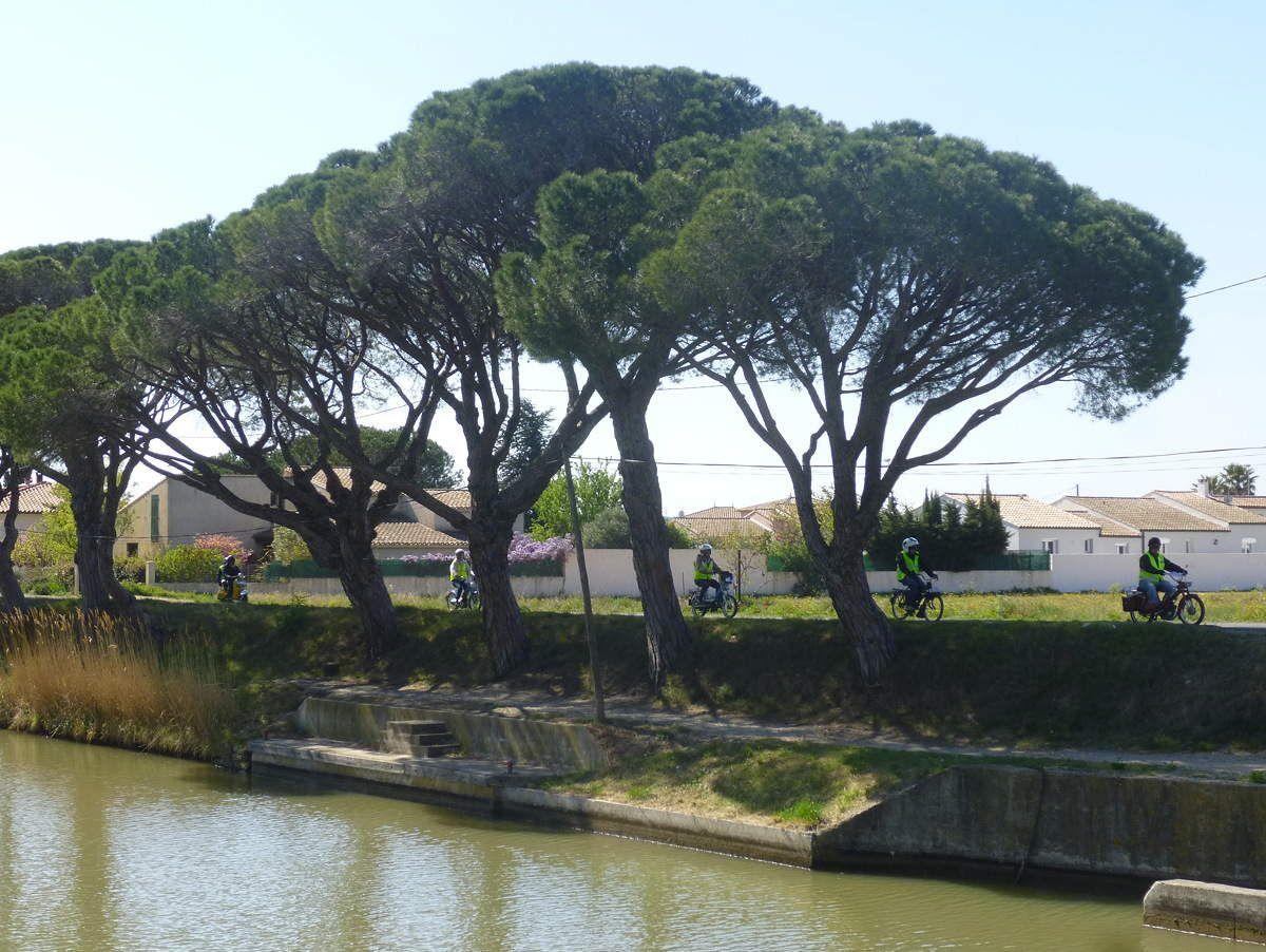 Cap sur Béziers le long du Canal et sous les pins (notez le respect de la distance de sécurité)