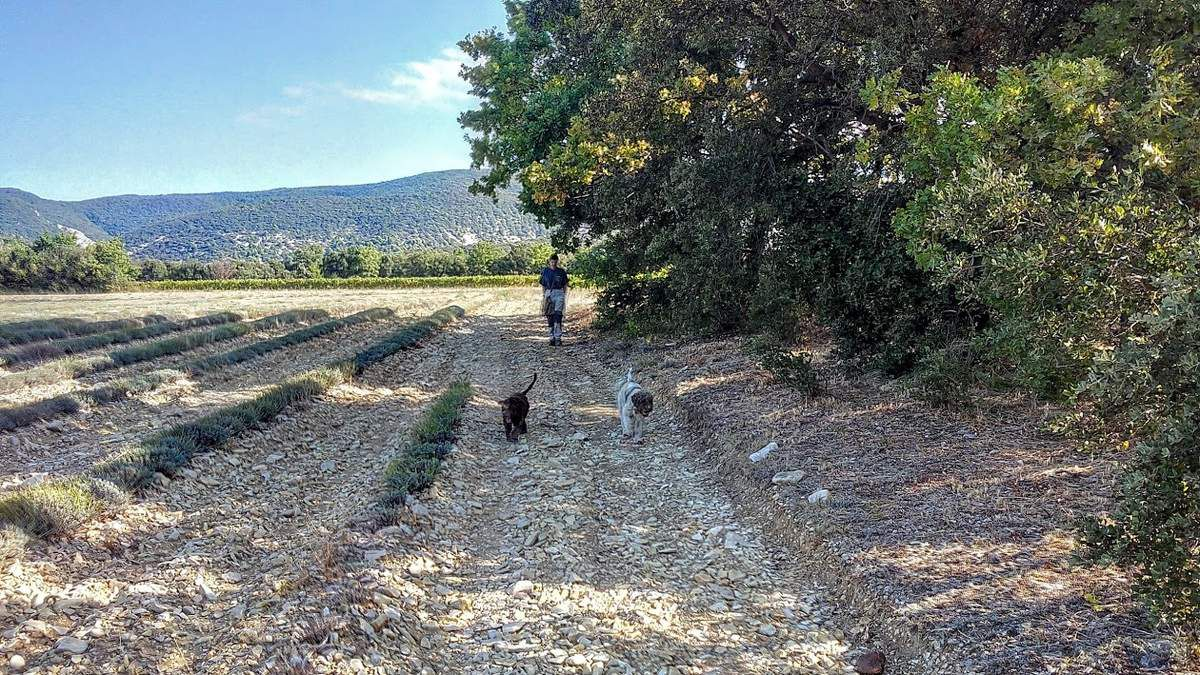 Lancement : Immersion à la Truffe