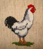 *Titoune73 et sa jolie famille de poules et coq