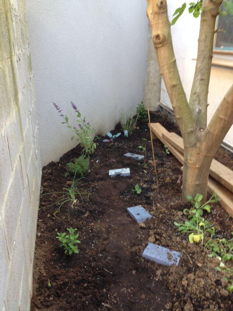 Les radis, les courgettes, les potirons et les plantes aromatiques sont plantés