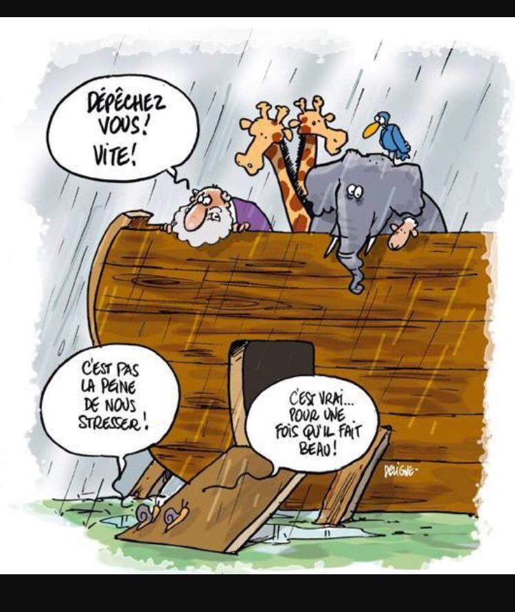 Chapitre 2 : Noé, son arche, le déluge et sa mère avec !