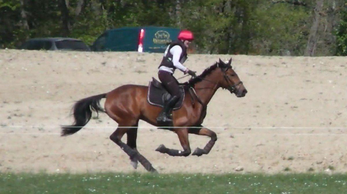 Concours jeunes chevaux de Pibrac : les efforts payent pour Qualy!