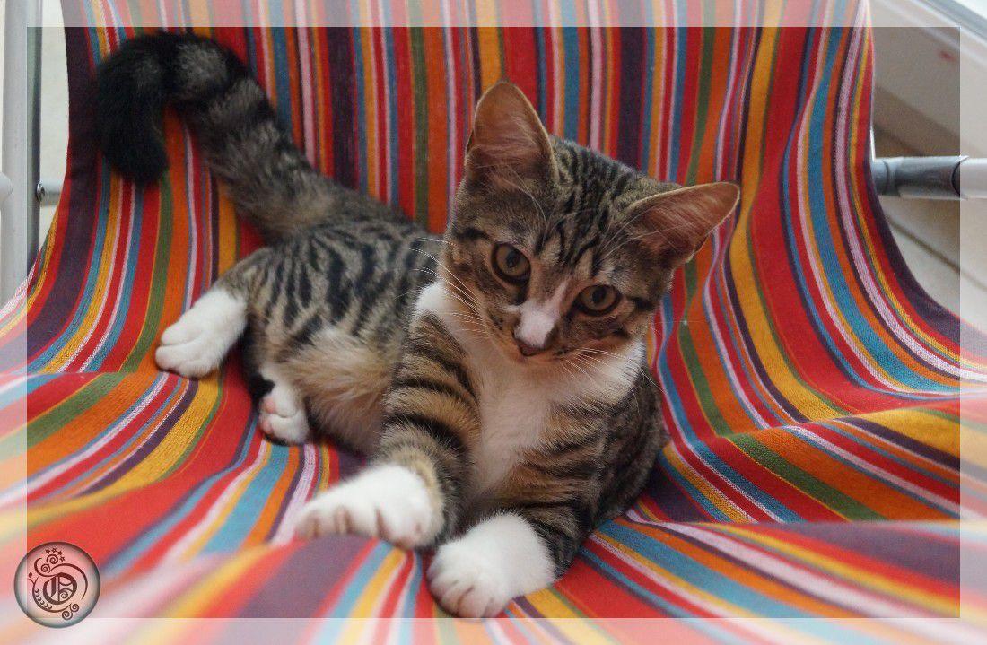 Wasabi le chaton #9