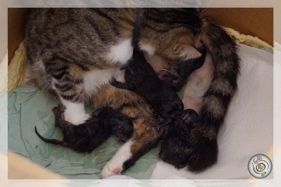 Naissances (chatons #1)
