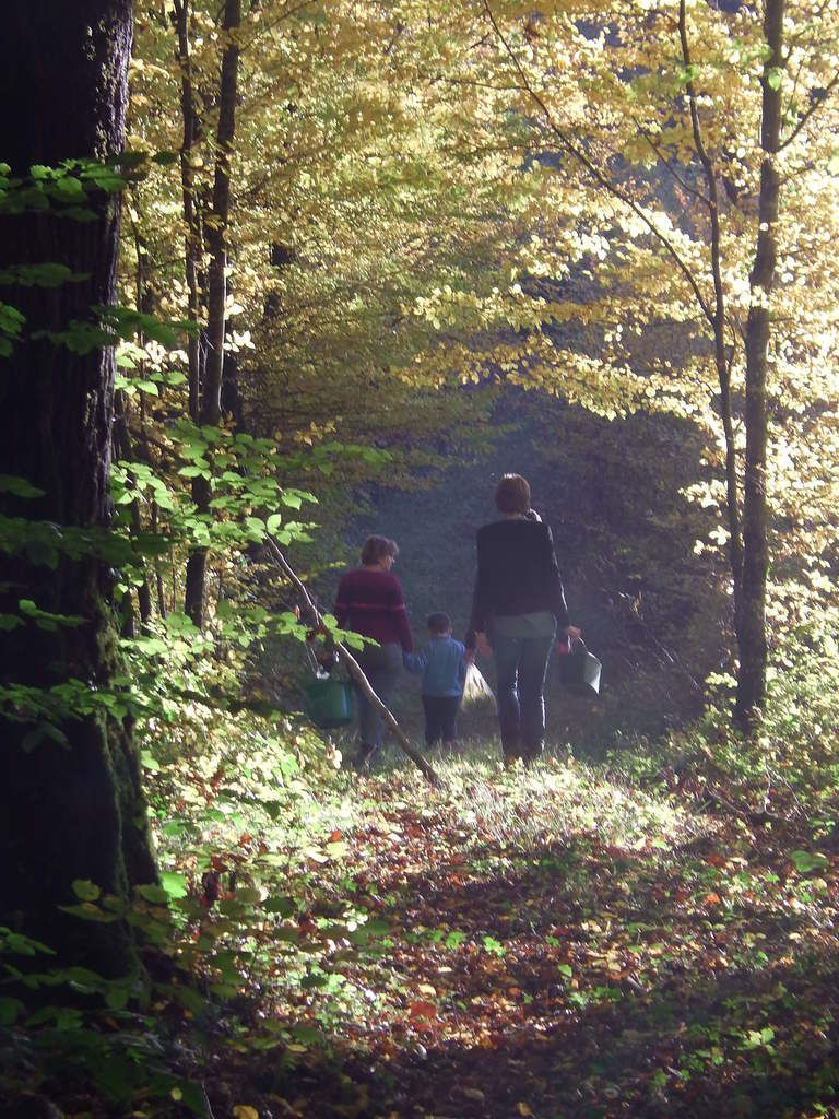 la forêt de Brotte-les Ray