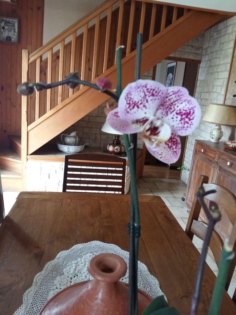 Mon orchidée  vient de refleurir