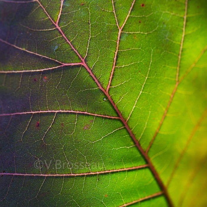 Au plus près de la palette - feuilles d'automne -
