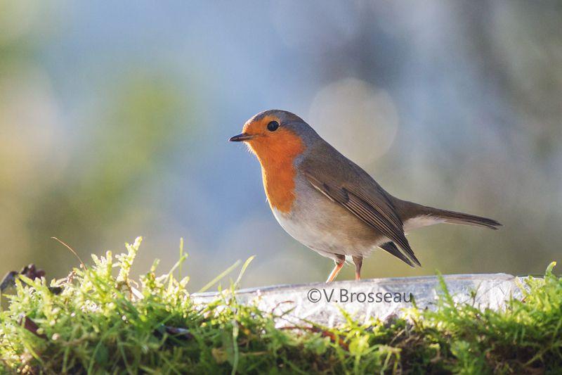 Robin vous souhaite une belle journée et belle soirée !
