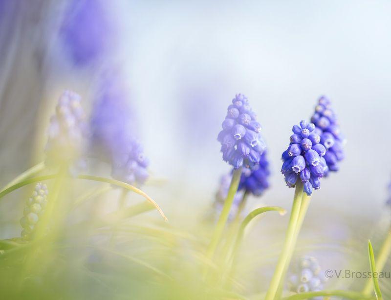 Restons dans les petites fleurs ...