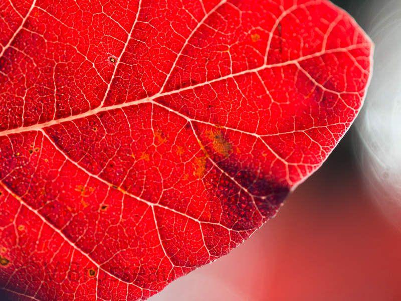 Riches couleurs d'automne ...