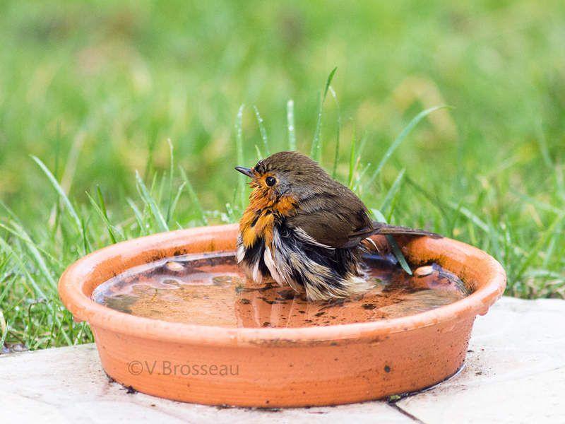 Pour prendre ton bain dans l'eau du jardin ....