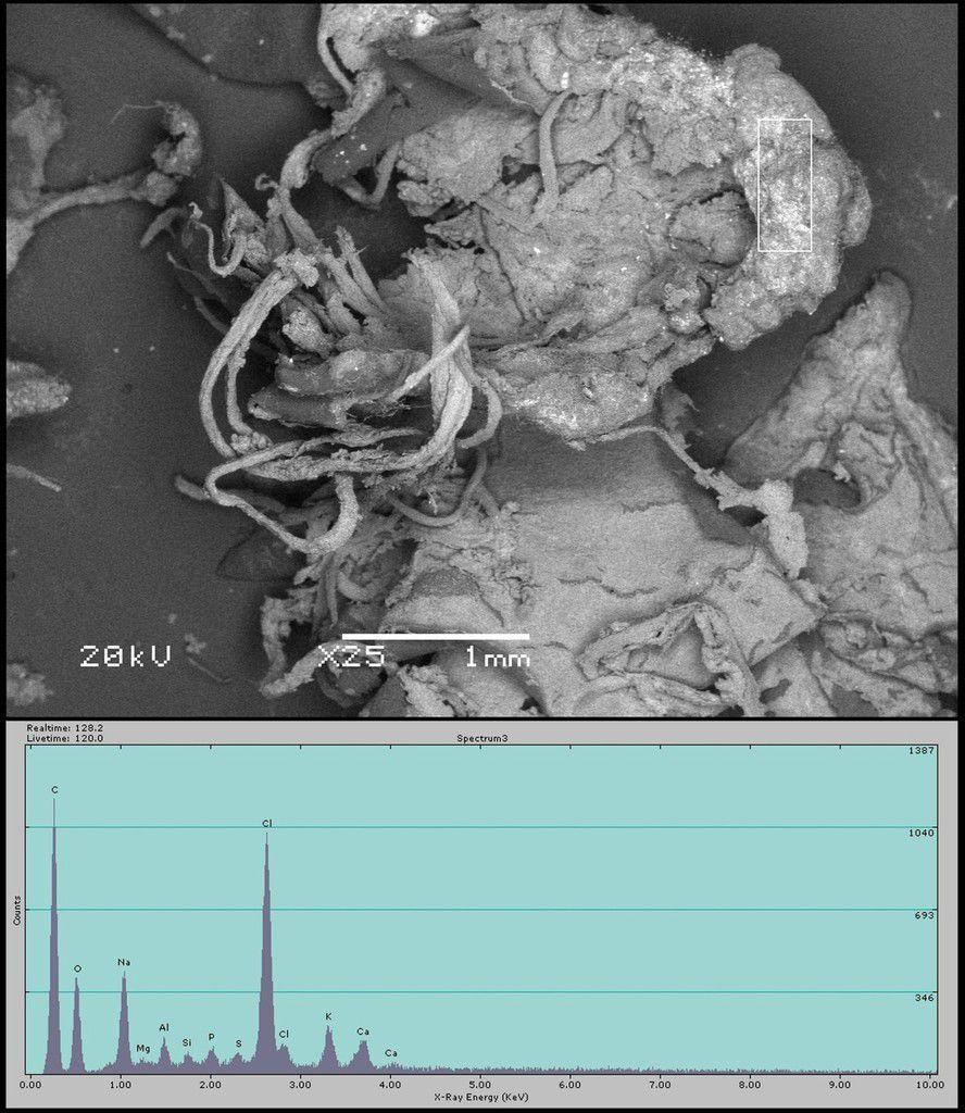 Fig. 6Photographie au microscope à balayage électronique d'un échantillon de substance tombée. Le rectangle blanc indique la zone où l'analyse EDX a été effectuée. Les valeurs EDX numériques sont réunies dans le tableau 1.