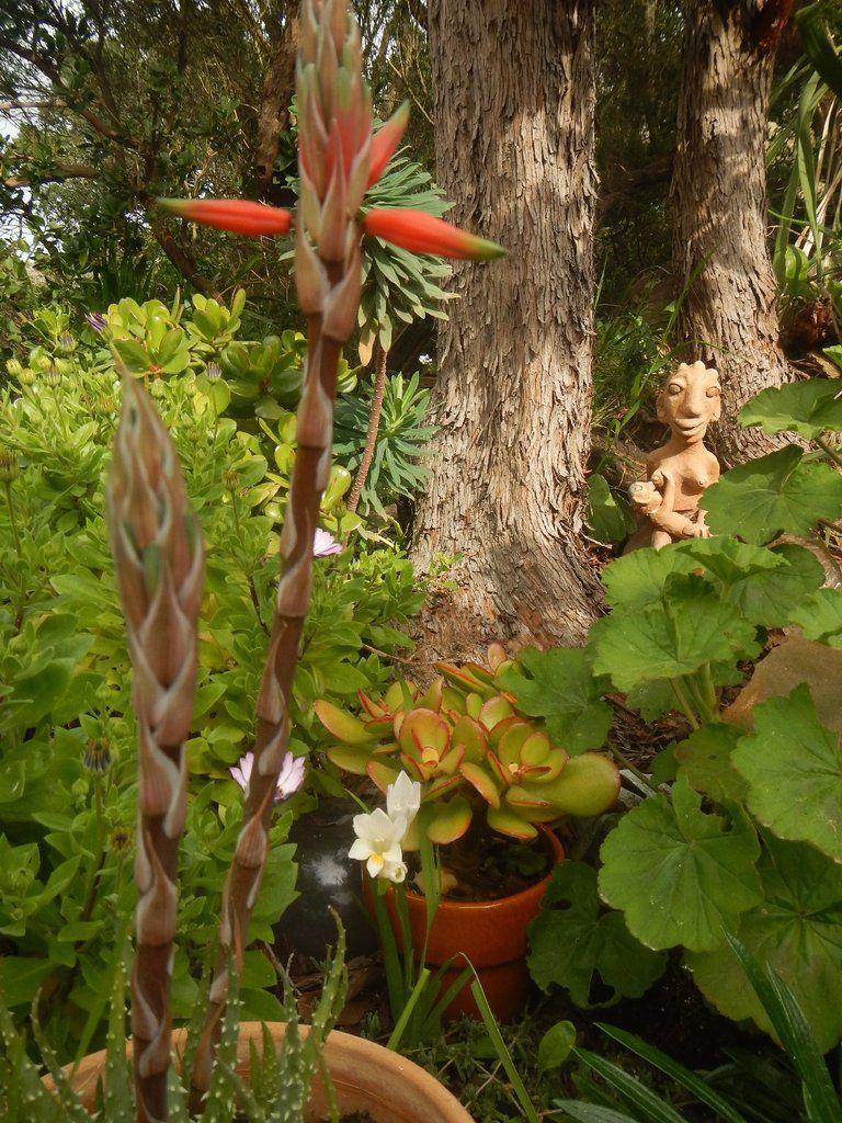 Dans les jardins d'Héliopolis - île du levant