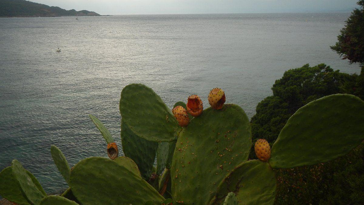 Cactus en bord de mer