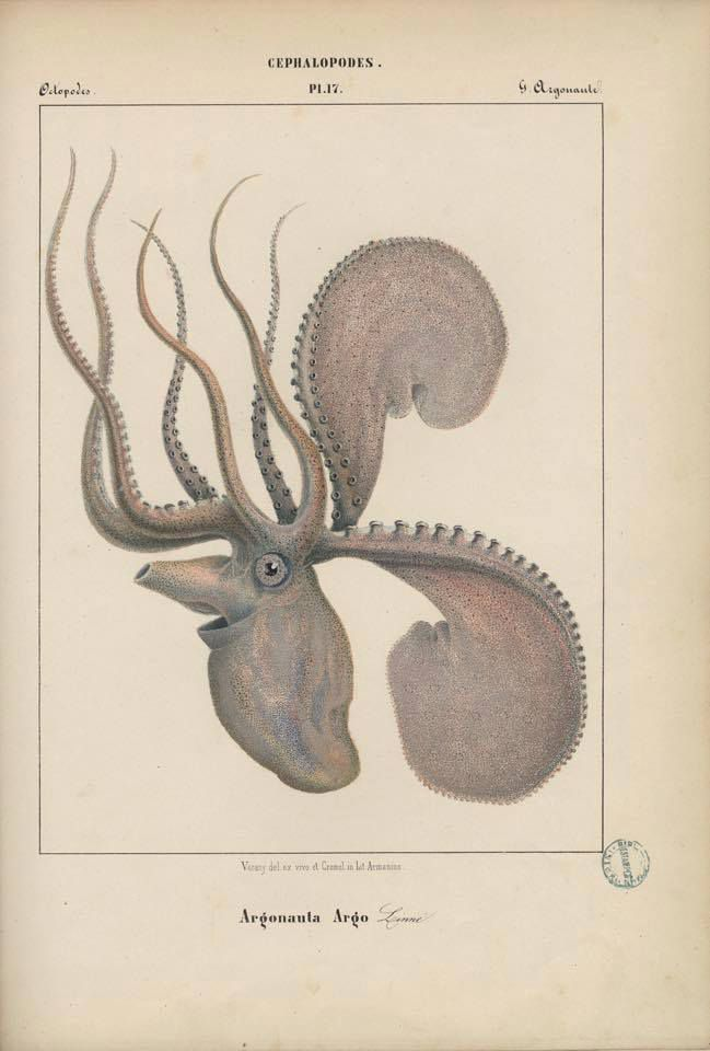 Les Mollusques - Brigitte Chamagne Rollier