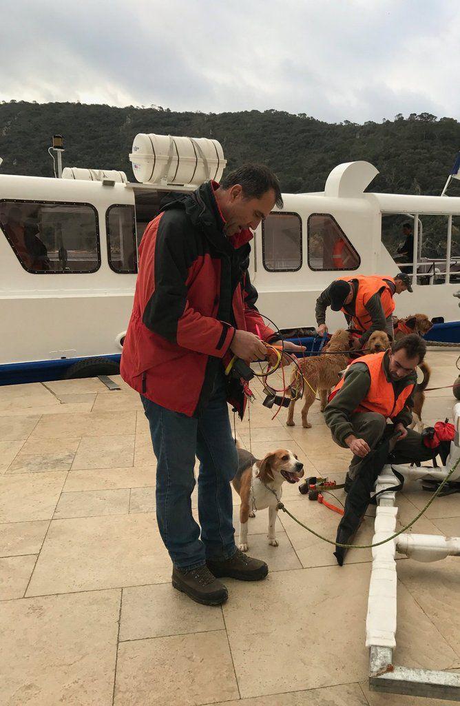 Rotation spéciale du Port d'Hyères ce 2 février avec 40 chasseurs et des chiens avec comme cibles 150 sangliers. Merci à Monique et Philippe pour les photos !