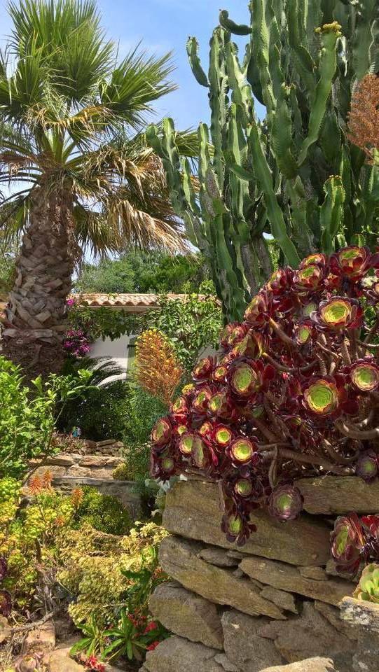 Dans le jardin de Cabo Verde. Photos P. Quillier