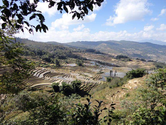 Novembre 2013, séjour dans le Yunnan : les rizières en terrasse de Yuan Yang