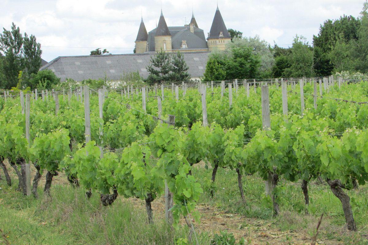 J.33 St Aubin de Blaye - Blaye  -&gt&#x3B; Lamarque  21 + 3 km