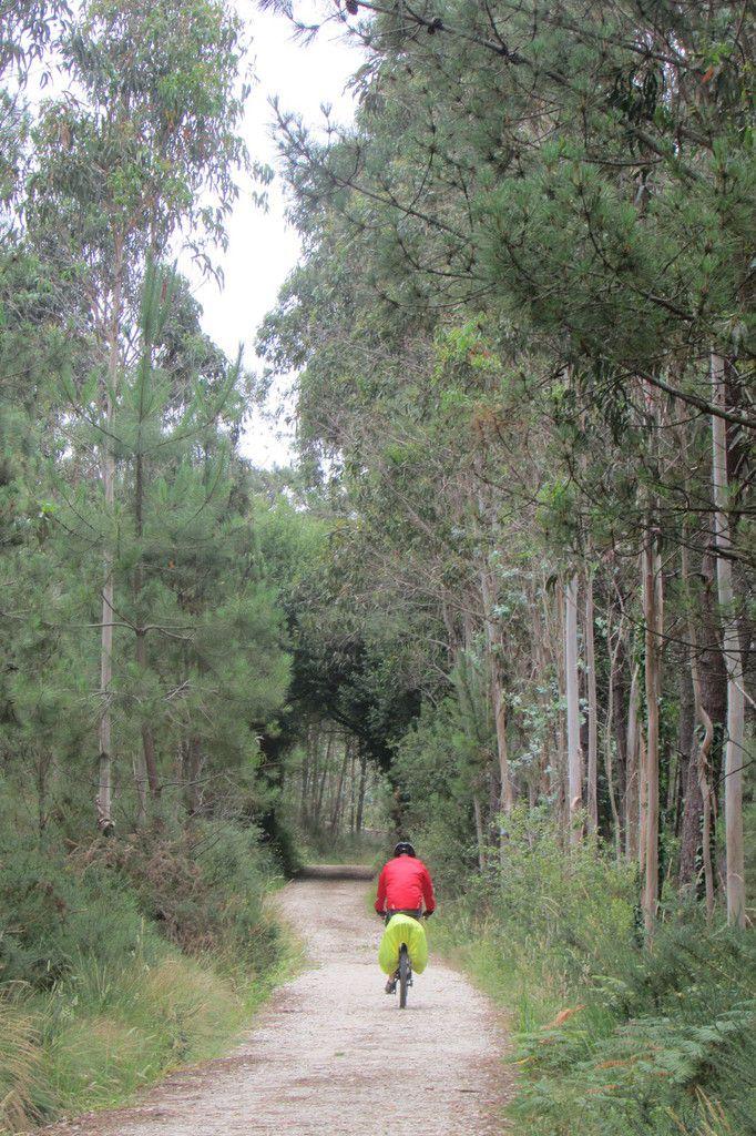 heureusement , les chemins forestiers reviennent...et 1 cycliste !