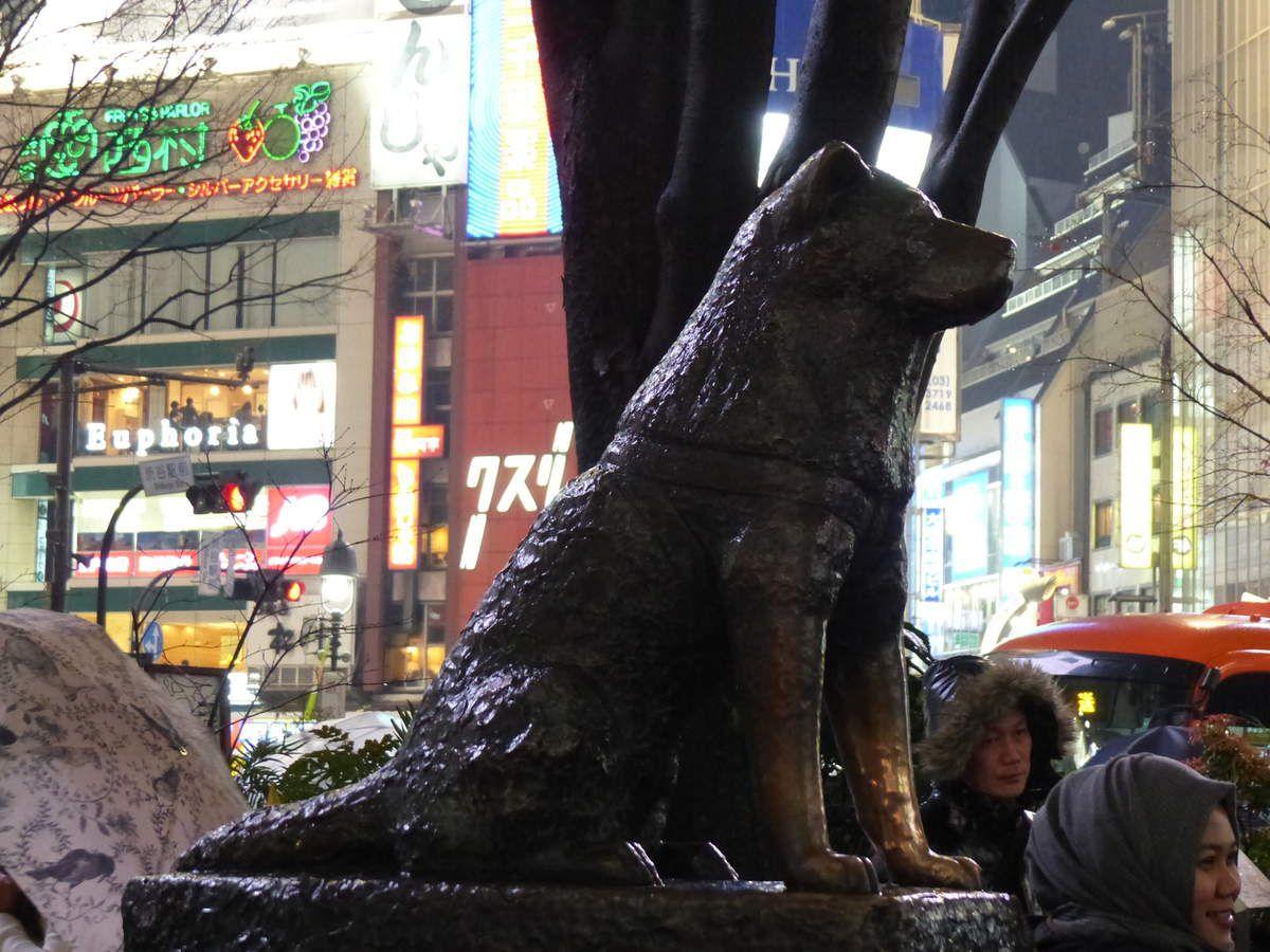 Achiko, chien fidèle...