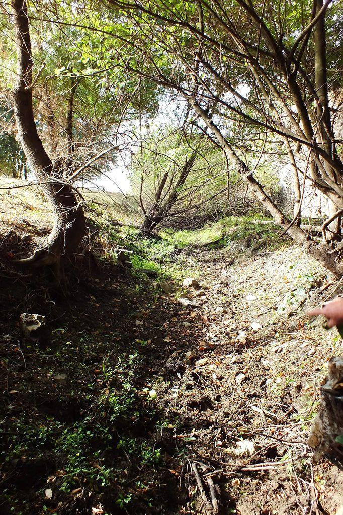 ...  tantôt soutenue par un arbrisseau qui, bien malgré lui, a pris dans ses branches cet étrange anaconda de fer.