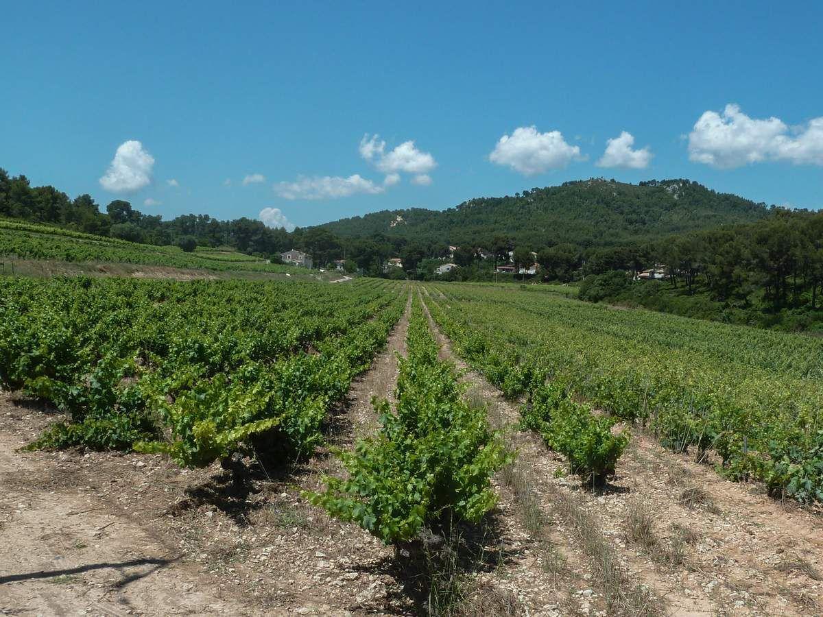 Retour à la Madrague , après la dernière randonnée précédant la trêve estivale. Rendez vous lundi prochain pour l'AG.