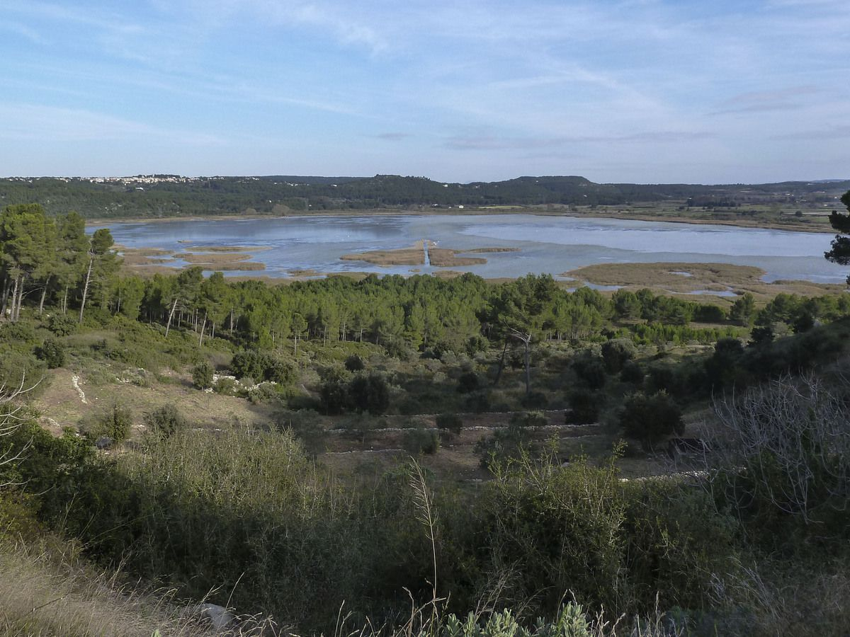 L'étang du Pourra ...le préféré des oiseaux.