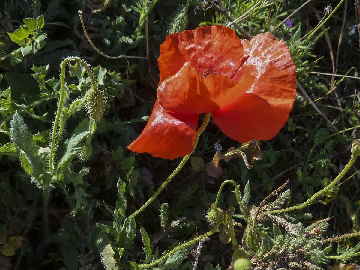 Rando du 2 mai 2016 : Montredon -Callelongue