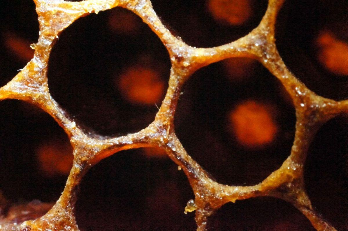 Nid d'abeilles