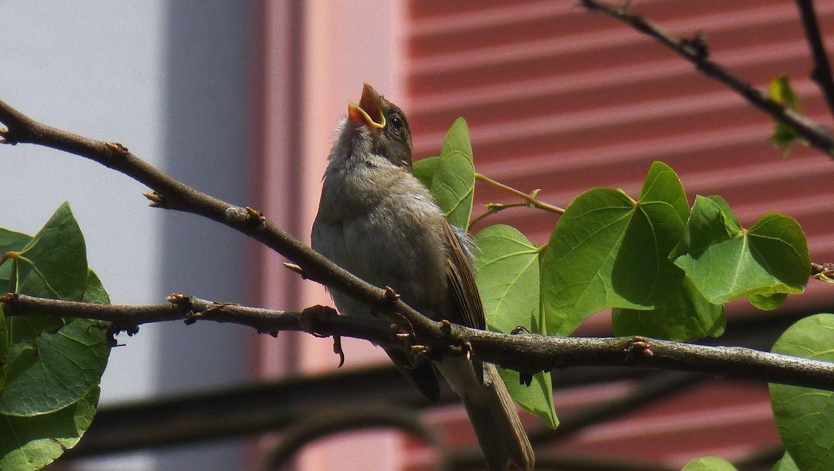 Chant d'oiseau ...