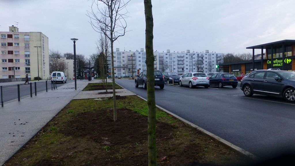 Un parking arboré, ce matin