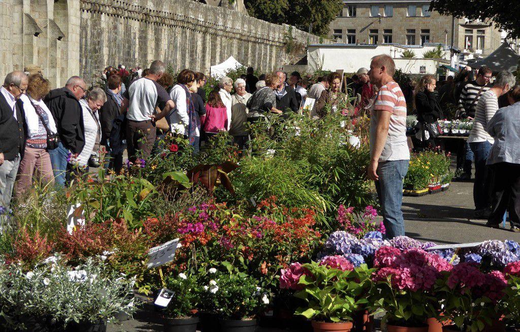 De retour du marché de la fleur d'automne à Quimper