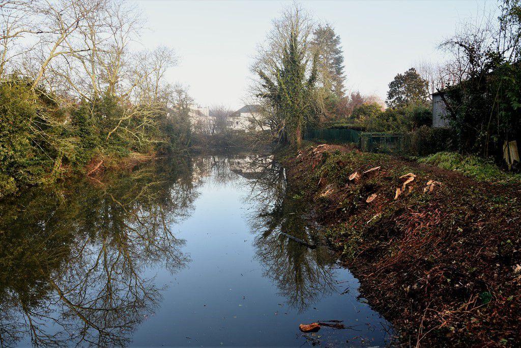 Tronçonnage à l'étang de la cale neuve ...