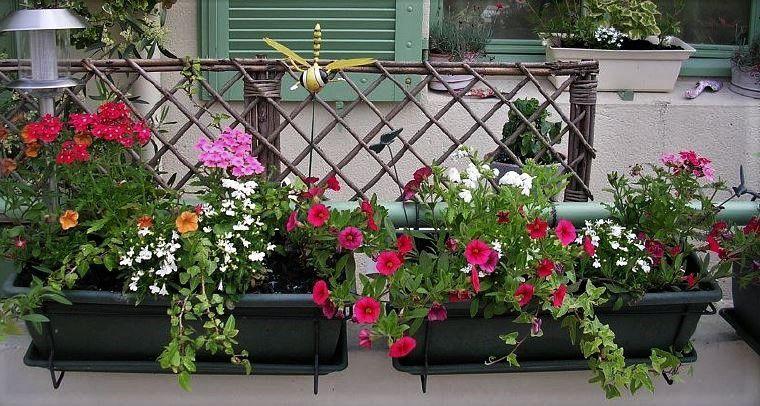 Concours des maisons, jardins, balcons, fenêtres, îlots... fleuris : inscriptions jusqu'au 26 mai