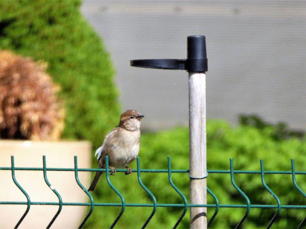 Quelques oiseaux du voyage