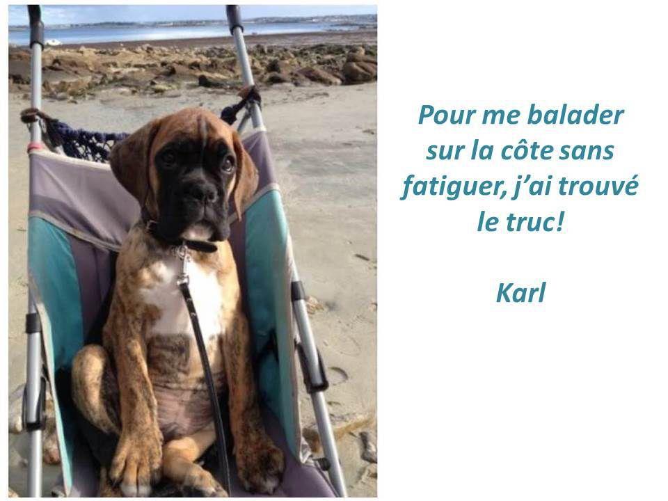 Carte postale de Karl