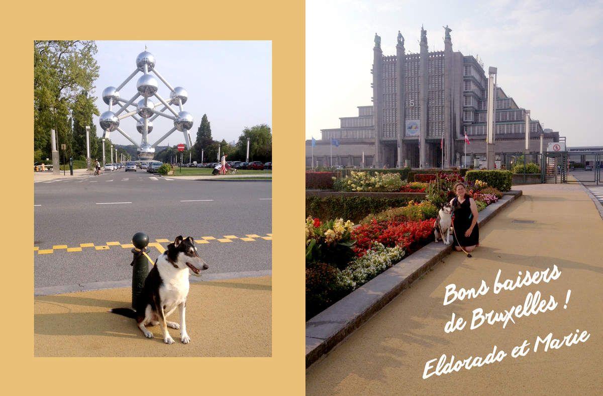 Carte postale d'Eldorado
