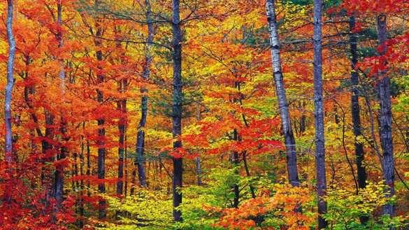 Des couleurs splendides pour la première journée d'automne...