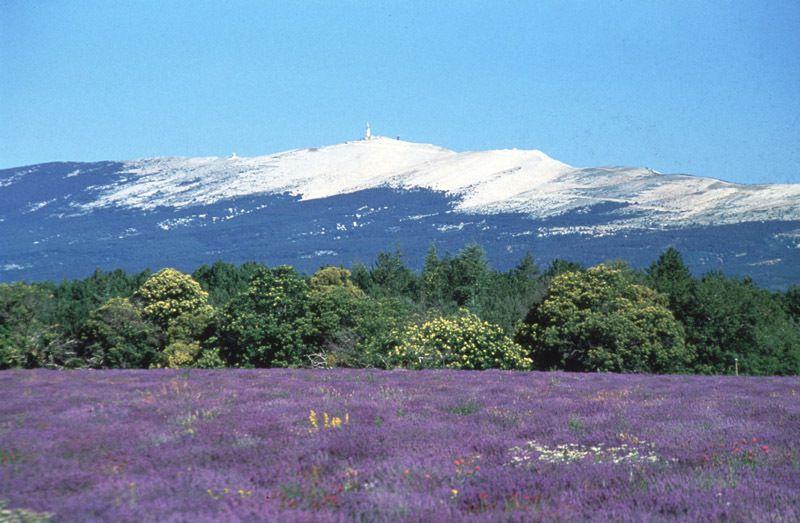 Le mont Ventoux ou Géant de Provence, dont Pétrarque fit l'ascension en avril 1336. Lisez le récit qu'il en fait et sa descripion merveilleuse du panorama que l'on découvre à son sommet.