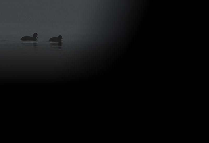 ALBUM - OISEAUX A - F