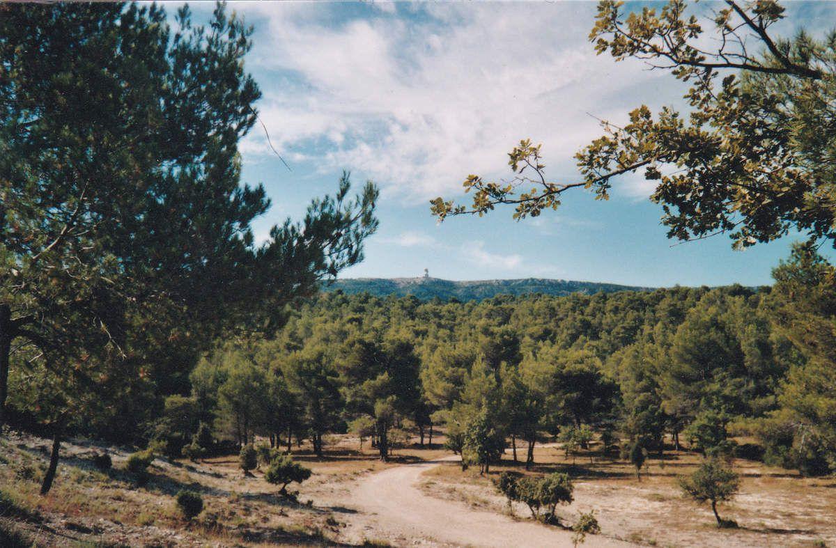 Mardi 2 septembre 2008 : Plan d'Aups Sainte-Baume