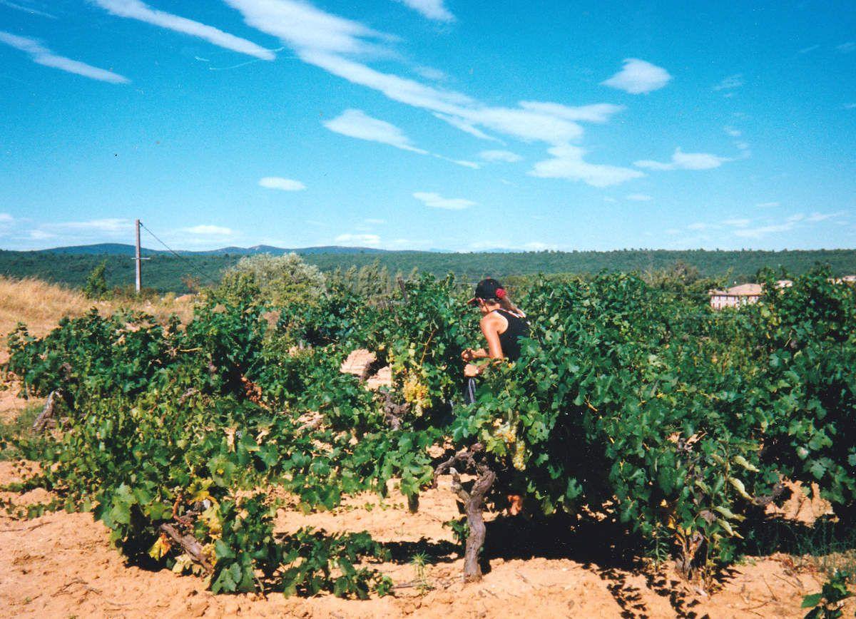 Ma Belle et les vignes, en 1998