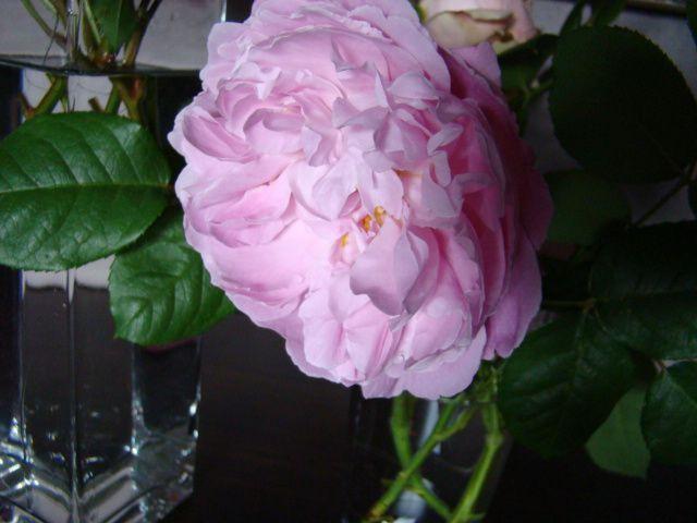 J'aime les rosesmais juste celles qui poussent au jardin. Mais travailler du rose a été compliqué pour moi . Après plusieurs tentatives j'ai relevéle défi .