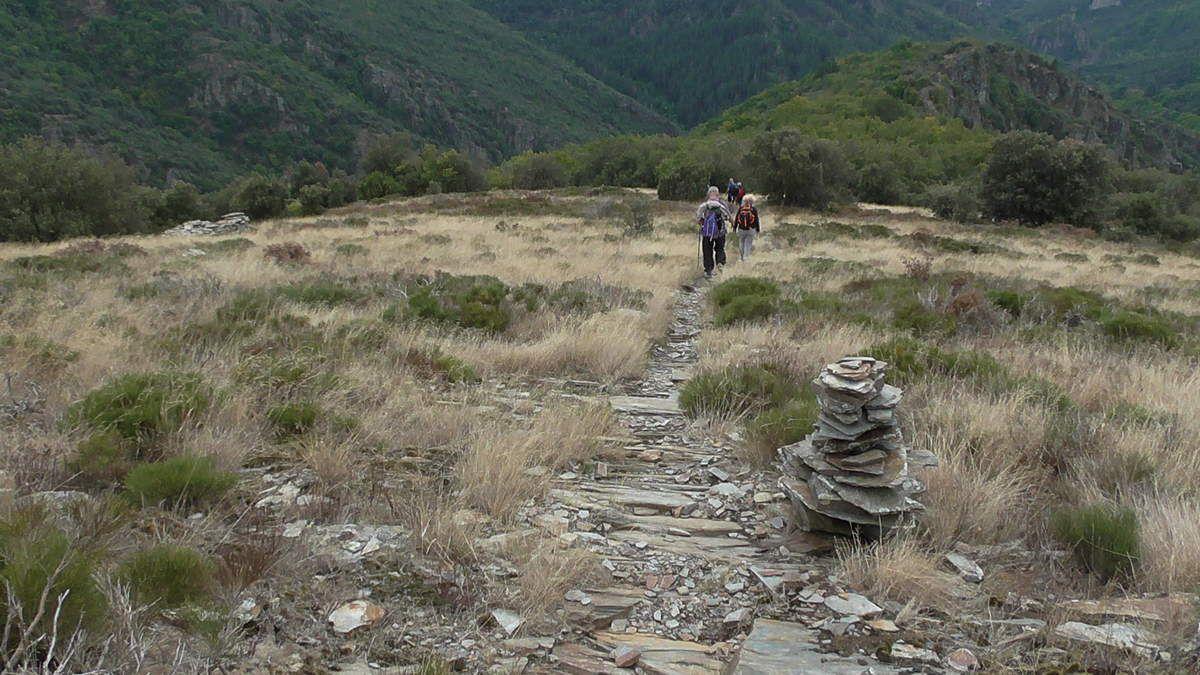 Nous redescendons, avec comme habituel compagnon de la Montagne Noire : le schiste  au naturel ou structuré et que les mousses colonisent  vite