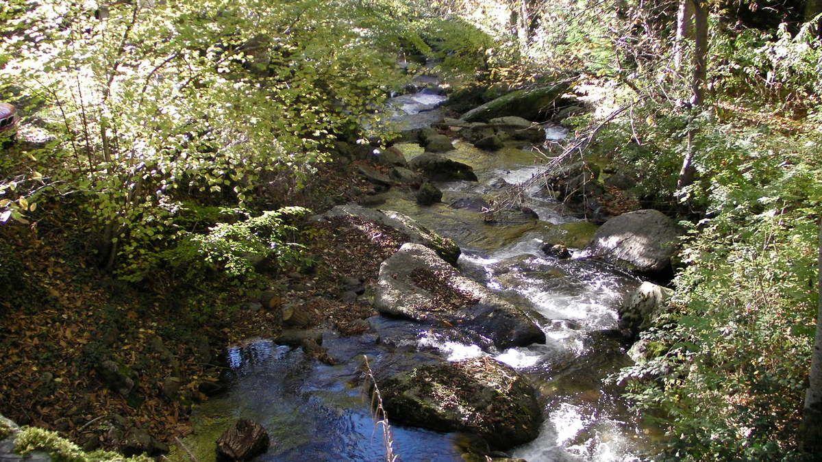 Voilà la carte postale du jour : forêt de châtaigniers, eaux vives des ruisseaux