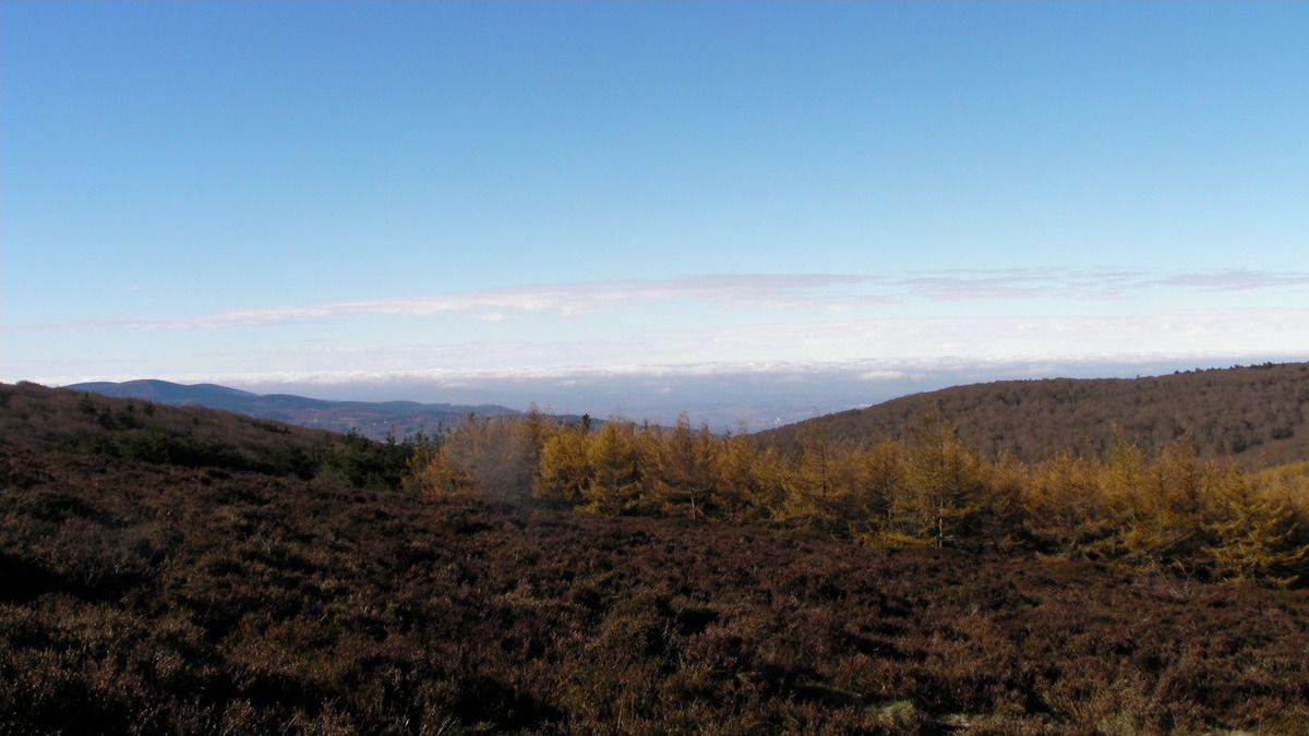 Au-delà des landes et des arbres, derrière les collines, le Tarn