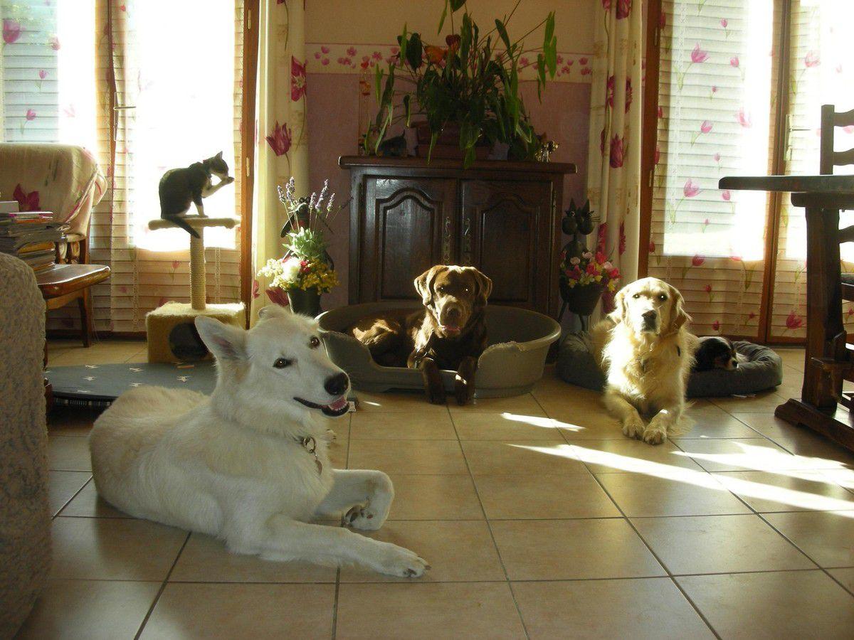 a l 39 harmonie des chiens 38. Black Bedroom Furniture Sets. Home Design Ideas