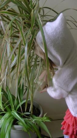 s'occuper des plantes a 3 ans